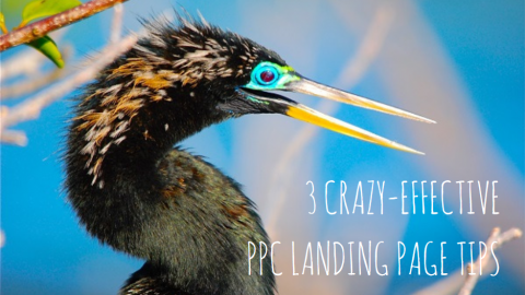 3 Woefully Underused, Crazy-Effective PPC Landing Page Tips