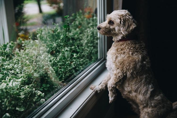 puppy looking out window